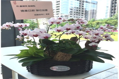 Potted orchids phalaenopsis or bouquetbouquet gifts is one of the best gift to appreciate your clients alliance. A pot of fresh orchid plant as a reception ...